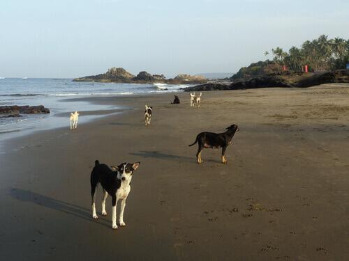 La Spiaggia del Cane in Brasile