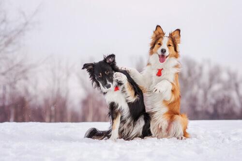 Il freddo è il peggior nemico dei cani