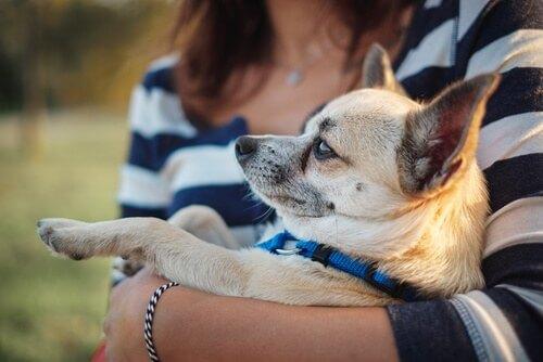 Un malato e il suo cane si curano a vicenda
