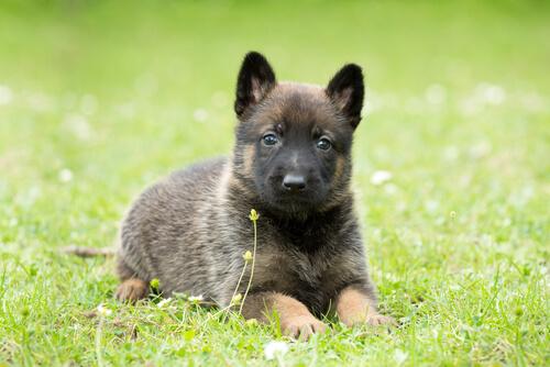"""Insegnare al cane il comando """"a terra"""""""