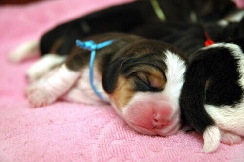 Come prendersi cura di un cucciolo orfano