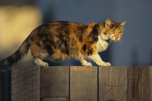 Abbi, la gatta da guardia