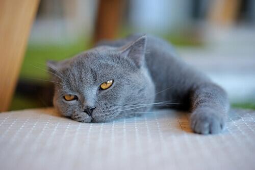 sintomi di malattia nei gatti