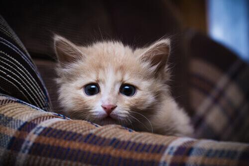 gatto-spaventato-dai-fuochi artificiali