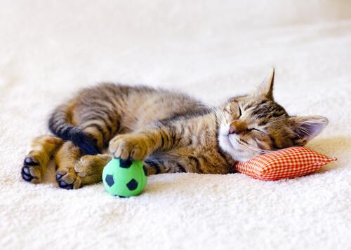 gattino dorme sul cuscino con i suoi giocattoli