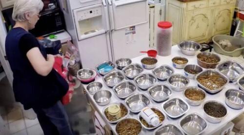 Creata una casa di riposo per animali anziani