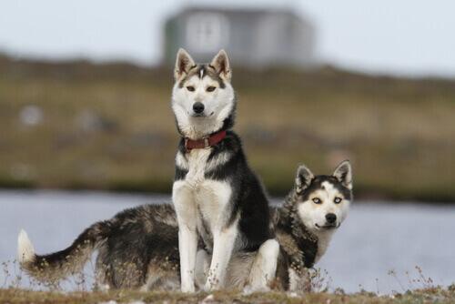 4 razze di cani che godono di ottima salute