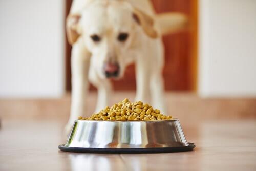 cane e ciotola con crocchette