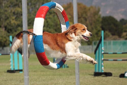 sport per cani