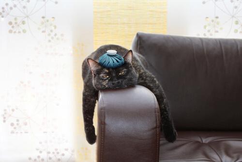 gatto nero sul divano