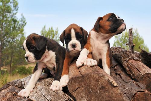 tre-cani
