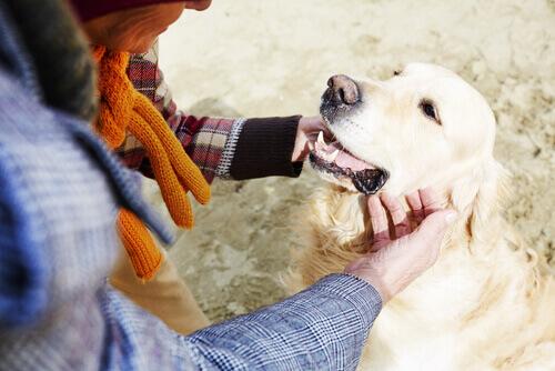 signora accarezza cane