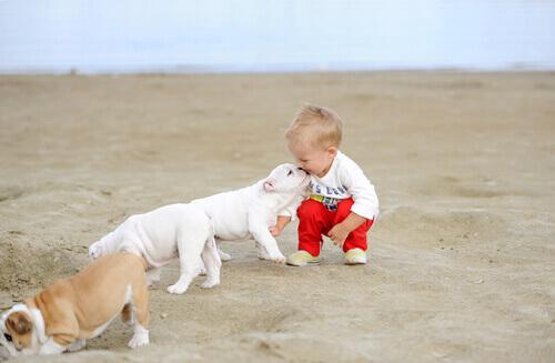 bambino sulla sabbia con cani
