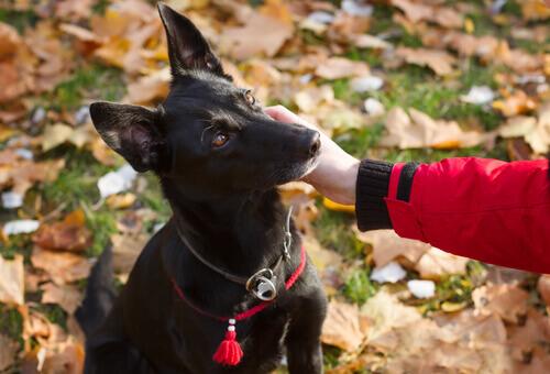 Cagnolina percorre più di 300 km in segno di riconoscenza