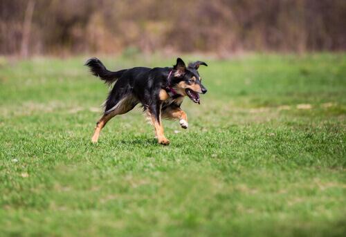 cani scappano