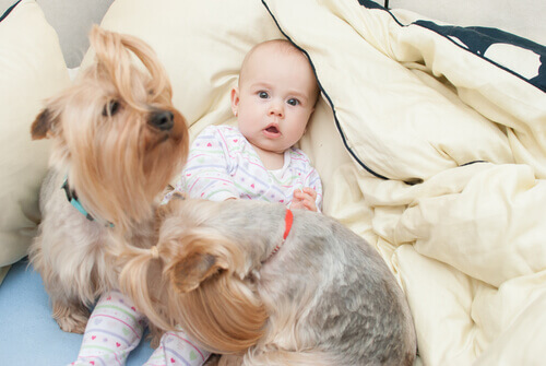 I cani migliorano la salute dei neonati