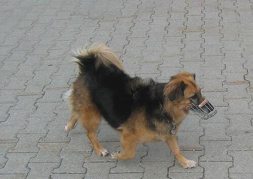 cagnolino con museruola