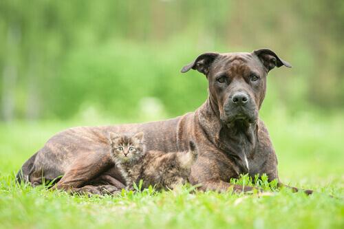 gatto-e-cane-sul pato