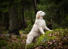 prodotti ecologici per cani e gatti