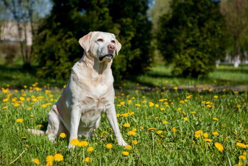 stranezze dei cani