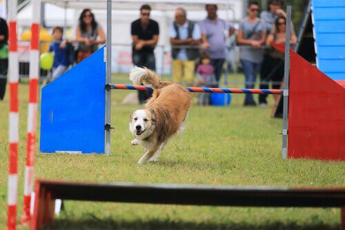 cane che salta