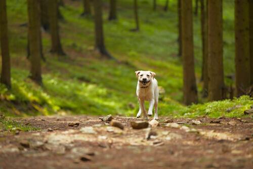 cane-nel-bosco