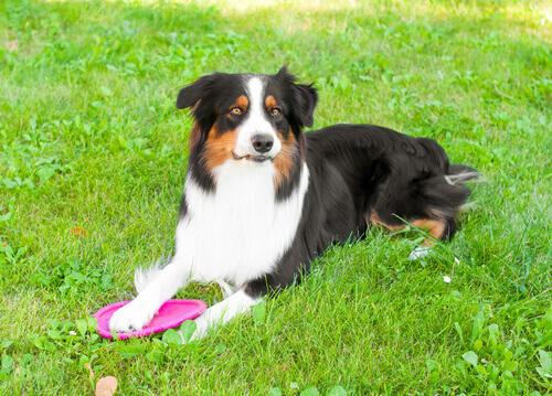 Se il cane non vuole giocare, può essere colpa vostra