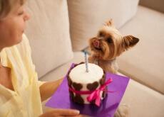 torta di mele per cani