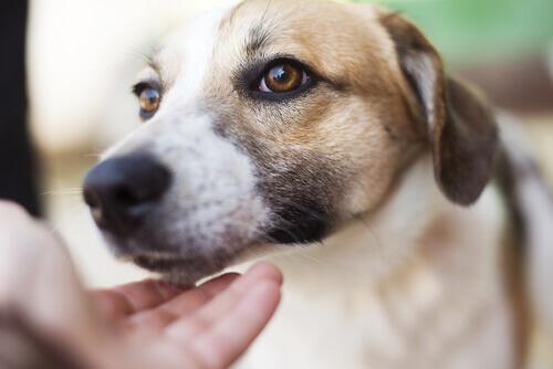 muso di cane e mano umana