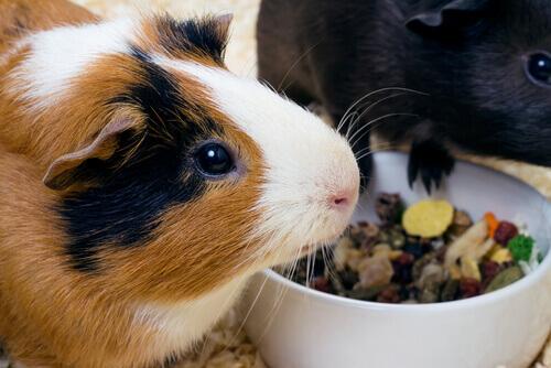 Scienziati contro gli esperimenti sugli animali