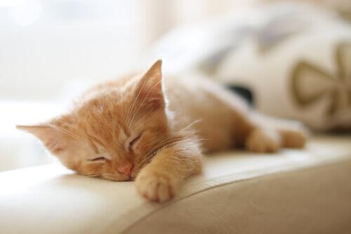 gattino-arancione-che-dorme