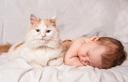 neonato e gatto