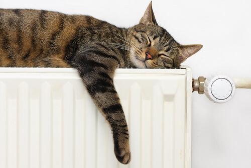 gatto che ama dormire sul termosifone