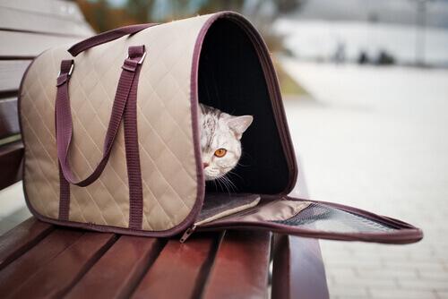 gatto-nel-trasportino