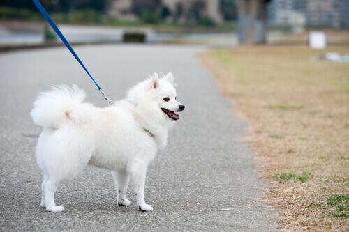 Passeggiare con il cane: un modo piacevole per mantenersi in forma