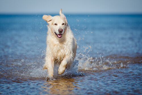 migliorare la salute del cane che corre in acqua