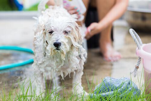 bagno al cane nel prato