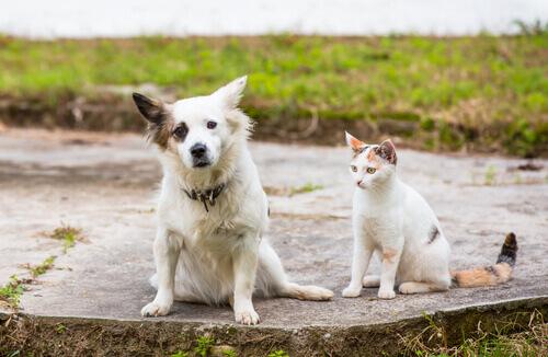 Principali normative sugli animali domestici