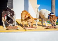 cani con molto appetito