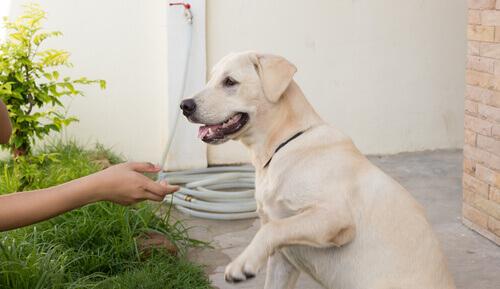 Primo soccorso per cani