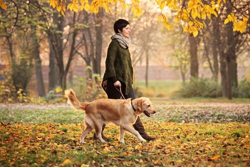 passeggiare con il cane nel parco