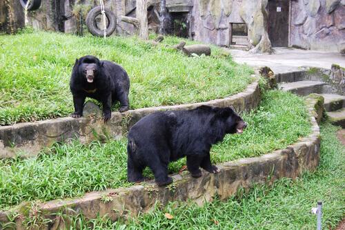 Cina: allevano due orsi scambiandoli per cani
