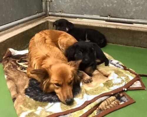 Istinto materno: una cagnolina esce dalla gabbia per consolare due cuccioli