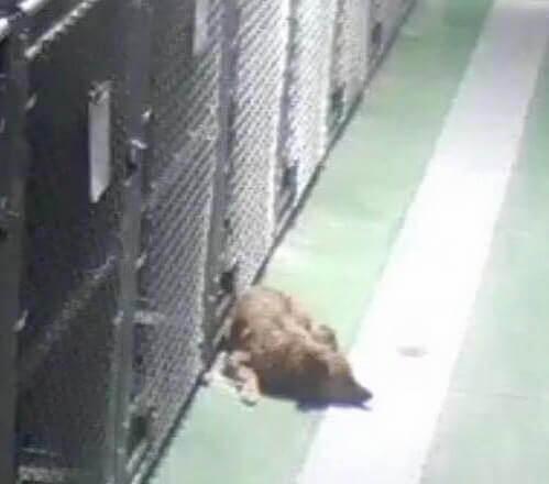cagnolina-esce-dalla-gabbia-per-consolare-dei-cuccioli
