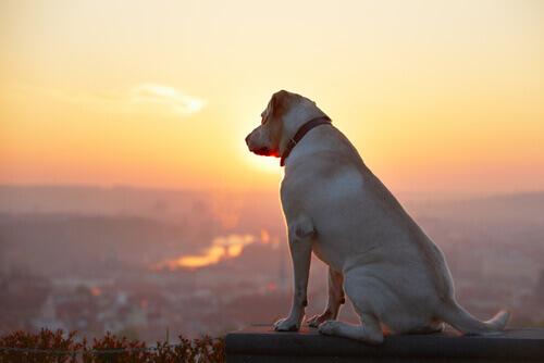 I cani provengono dalle stelle
