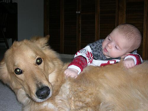 Cani eroici che hanno salvato la vita a dei bambini