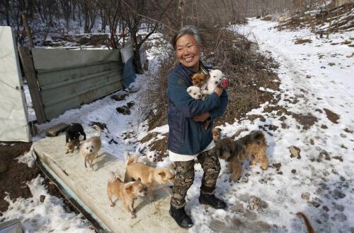 Corea-donna-che-salva-i-cani