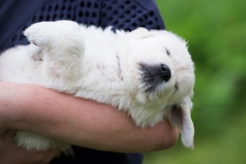 avere un cane tra le braccia