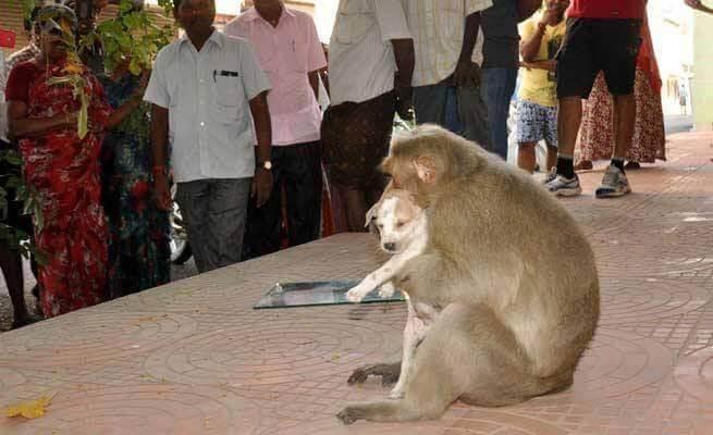macaco con in braccio cane