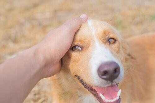 mano-che-accarezza-il-cane
